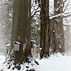 Maple Sugaring Time by Linda Jackson