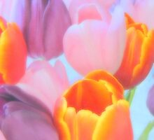 Tulip Dreams.. by trueblvr