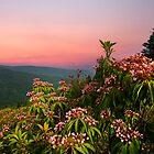 BLUERIDGE PARKWAY MOUNTAIN LAUREL by Randy & Kay Branham