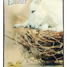 Happy Easter  ( a greeting card ) by Kristi Johnson