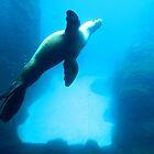 Portland Seal by kchase