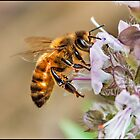 Busy Bee by Helenvandy