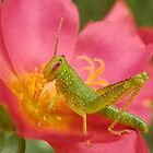 Green Grasshopper by lynareid