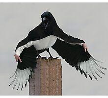 Magpie Dracula Photographic Print