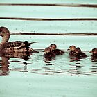 Swimming Baby Ducks by shifty303