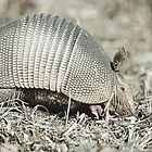 The Armadillo by shifty303