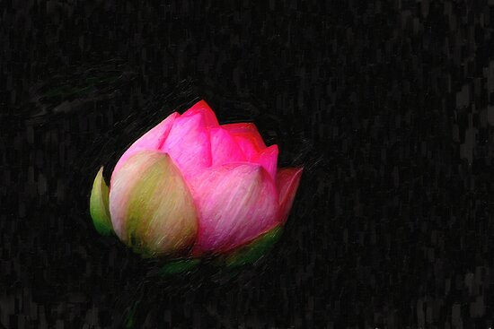 blooming lotus by Adam Asar