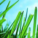 Growing Green  by DearMsWildOne