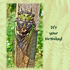 Birthday Greeting Card - Annual Cicada by MotherNature