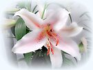 Lily White by MotherNature