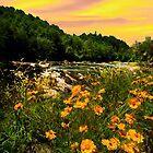 Buttercups  River Yellow Sky by Randy & Kay Branham