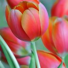 Spring Tulips by Heather Wade
