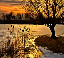 Cattail Sunset by Kathy Weaver
