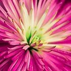 Flower by Thliii