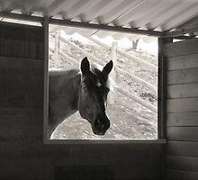Outside Looking In by Elle Newlands