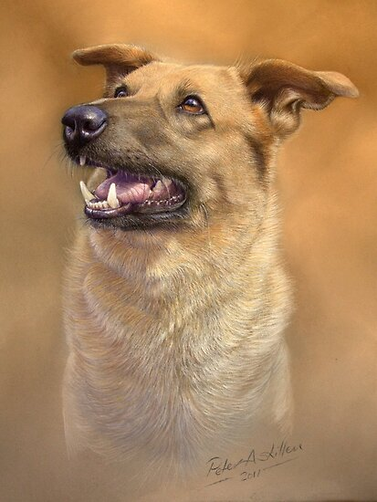 Dog portrait by Peter Skillen