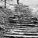Dovedale Steps by John Edwards