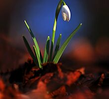 Signs of Spring by Macrae images
