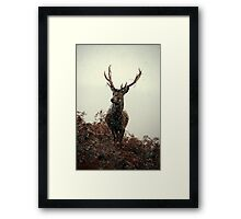 Stag in a blizzard Framed Print