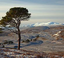 Winter in Strathglass by Macrae images