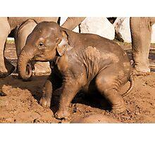 Muddy baby elephant Photographic Print