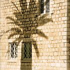 A Palm's Shadow - Trogir, Croatia by Tricia Mitchell