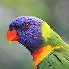 Rainbow Lorikeet by Chris Kean