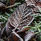 Frosty Leaf by Ben Johnson