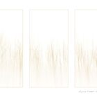 Soft Winter Trees. by AlysonArtShop