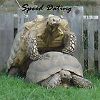 Speed Dating by KazzaF