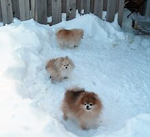 Poms Winter Playground by Sazzart