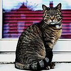 Llanfyllin cat by melek0197