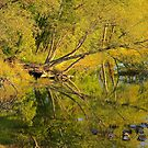 Golden Reflections by NatureGreeting Cards ccwri