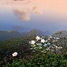 Lily Pond by Leonie Mac Lean