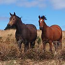 Two horses. by Esther's Art and Photography