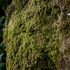 The moss by NatureBeauty