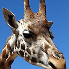 """Giraffe Portrait"" by jonxiv"