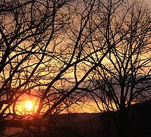 Sundown In The Sticks by NatureGreeting Cards ©ccwri