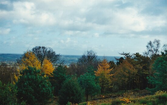 View Point Of Birmingham From The Lickey Woods 2 by Robbie Patterson