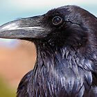 Raven by Stephen Beattie