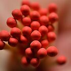 A Bouquet of Matchsticks by Brian Gaynor