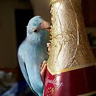 """Red Grape Juice"" Pacific Blue Parrotlet Portrait by Rick Short"