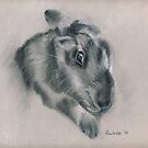 Bunny - original charcoal drawing by Paulette Farrell