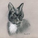 Cat - original drawing by Paulette Farrell