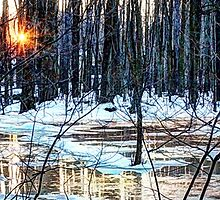 Tinker Park Frozen in Winter by Lisa Cook