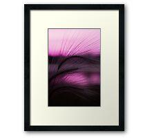 Grass Sunset Framed Print