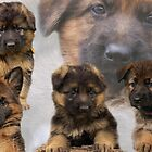 German Shepherd Puppy Collage by Sandy Keeton