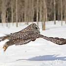 Flying leap by Heather King