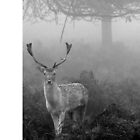 Deer in Nature by CaelanBruce