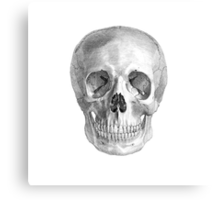 Albinus Skull 01 - Back To The Basic - White Background Canvas Print